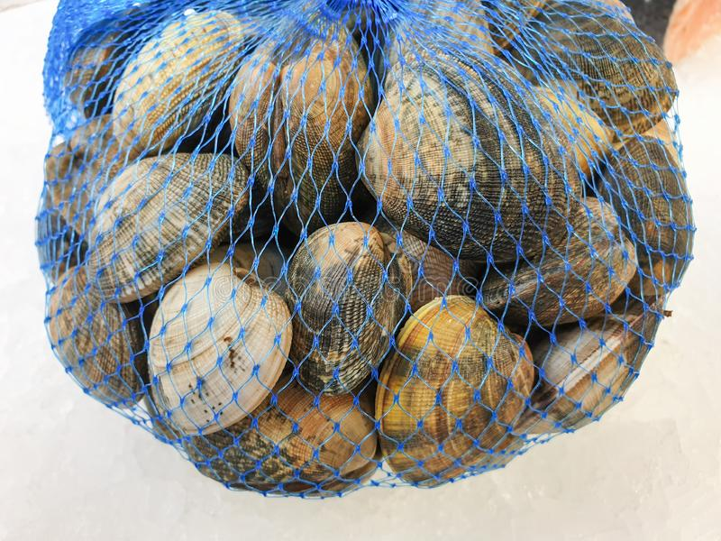 Fresh uncooked harvest clams  in the package stock photos