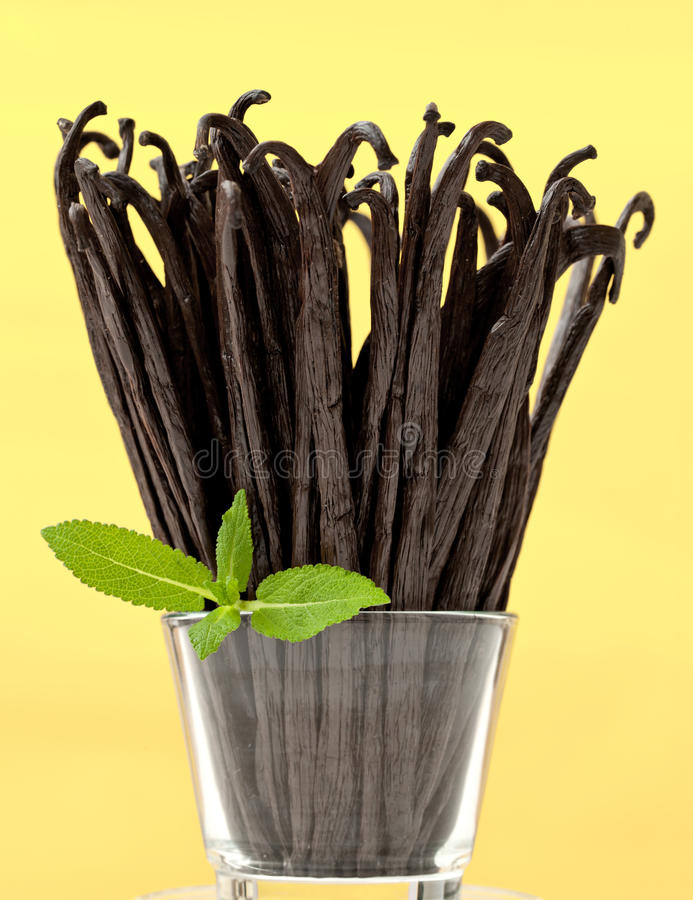Fresh Vanilla Bunch Stock Photography