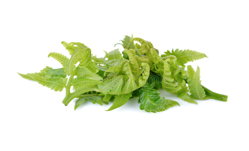 Fresh vegetable fern or paco fern on white background royalty free stock photos