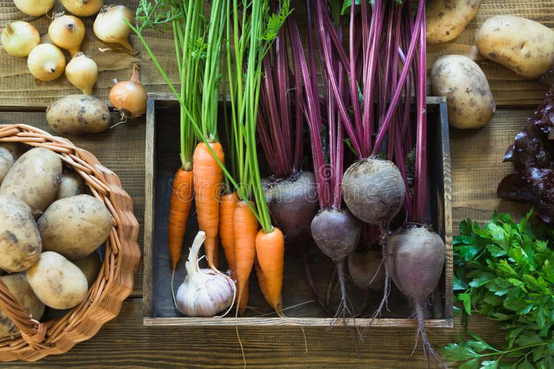 Fresh vegetables from carrot, beetroot, onion, garlic, potato in tray on old wooden board. Top view. Autumn still life. royalty free stock photos