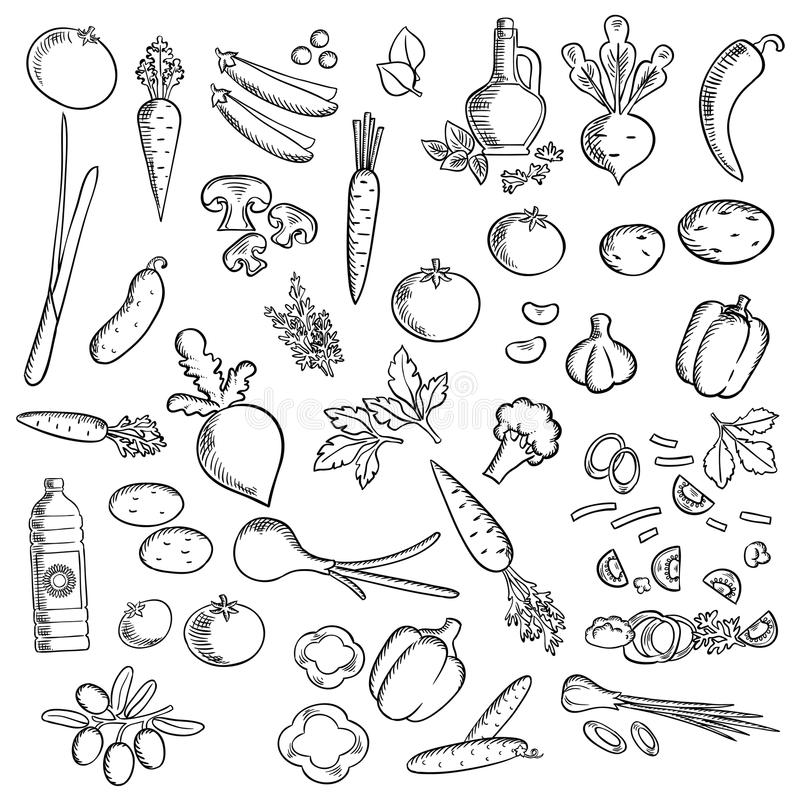 Fresh vegetables and condiments sketch icon. Sketched ripe tomatoes, fresh olives, garlic, mushrooms, carrots, green onion, cayenne and bell peppers, broccolies vector illustration