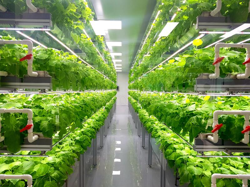 17,548 Vertical Farming Photos - Free & Royalty-Free Stock Photos from  Dreamstime