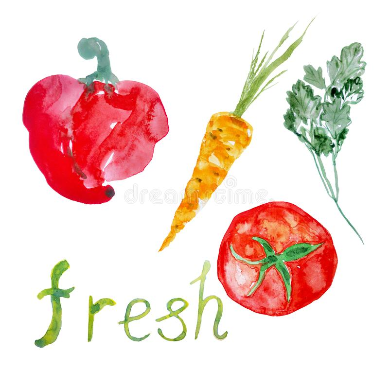 Fresh vegetables hand drawn background. Watercolor painted paprika, carrot, tomato, parsley. stock illustration