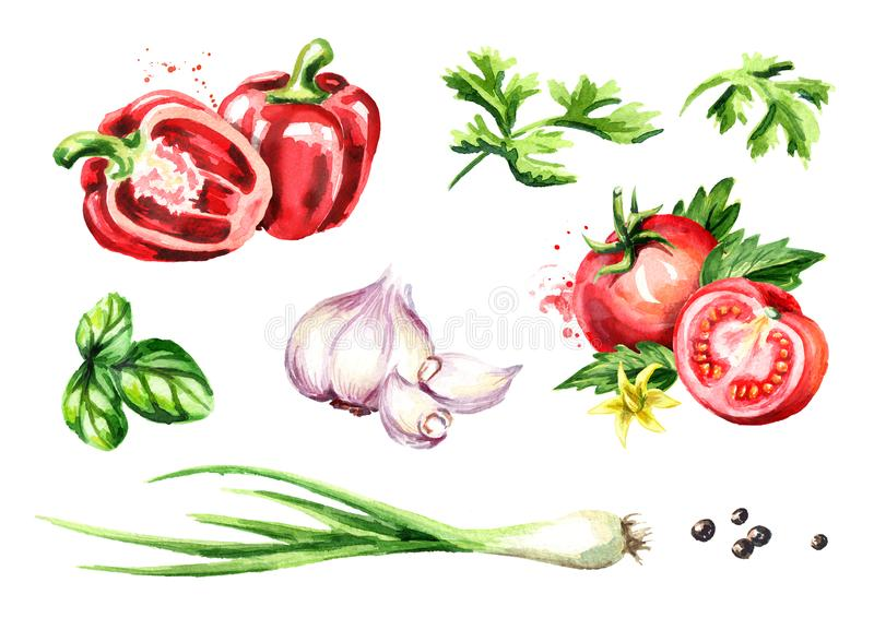 Fresh vegetables and herbs set. Watercolor hand drawn illustration, isolated on white background stock illustration