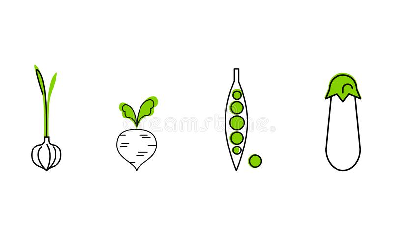 Fresh vegetables line icons set, garlic, green peas, beetroot, eggplant, organic healthy food vector Illustration on a. Fresh vegetables line icons set, garlic vector illustration