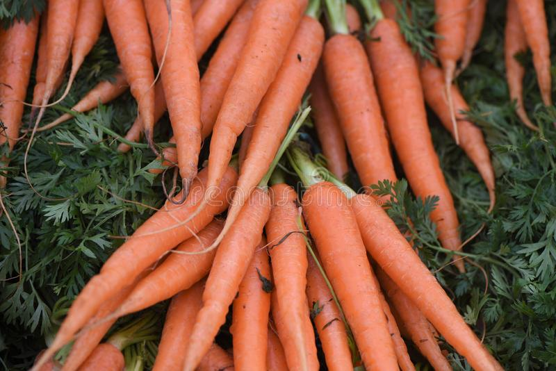 Fresh vegetables with lots of bright orange carrots with green leaf tops stock photos