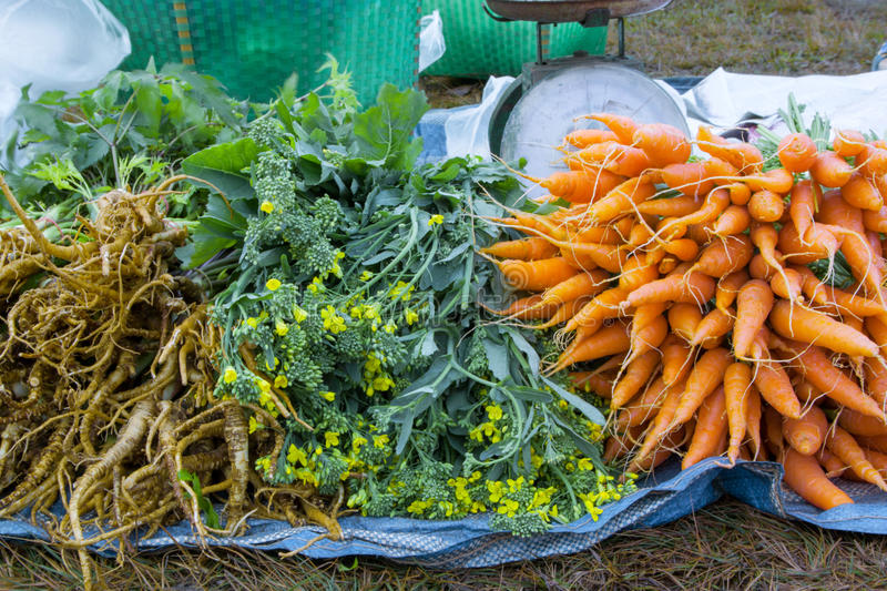 Fresh vegetables in the market,carrots,canton. Fresh vegetables in the market,carrots royalty free stock photography