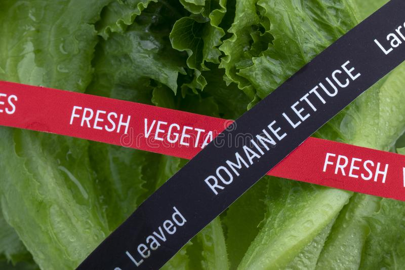 Fresh Vegetables. Romaine Lettuce. Concept of the outbreak of food poisoning E.coli royalty free stock photos
