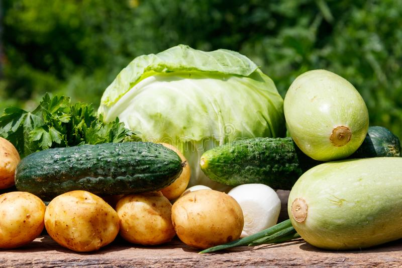 Fresh vegetables on rustic wooden table outdoor. Cabbage, cucumbers, parsley, new potatoes and onion on wood table on blurred background stock photo