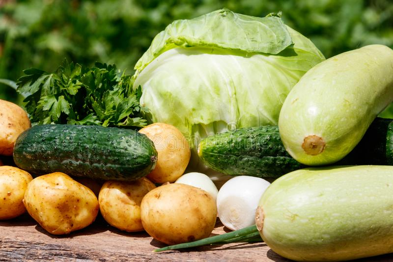 Fresh vegetables on rustic wooden table outdoor. Cabbage, cucumbers, parsley, new potatoes and onion on wood table on blurred background royalty free stock image