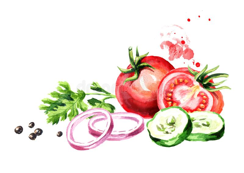 Fresh vegetables tomatoes, cucumber, onion, parsley, coriander, cilantro, pepper. Watercolor hand drawn illustration, isolated on. White background stock illustration