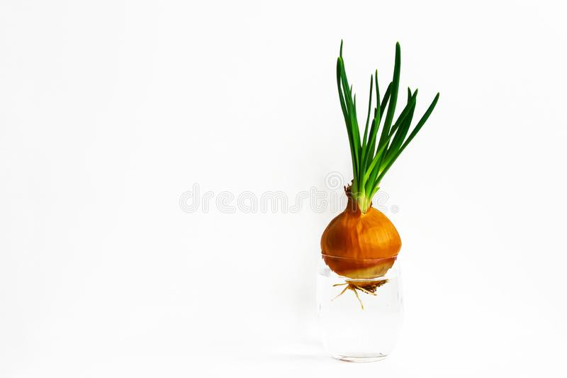 fresh verde vegetablesisolated, macro, natura, Piume dell'arco immagine stock