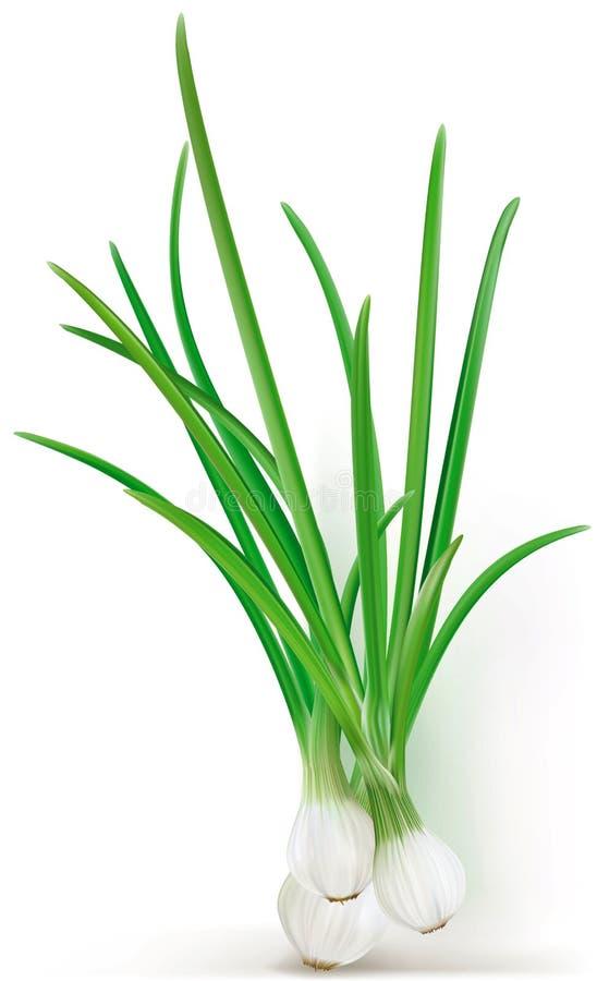 fresh verde vegetablesisolated, macro, naturaleza, ilustración del vector