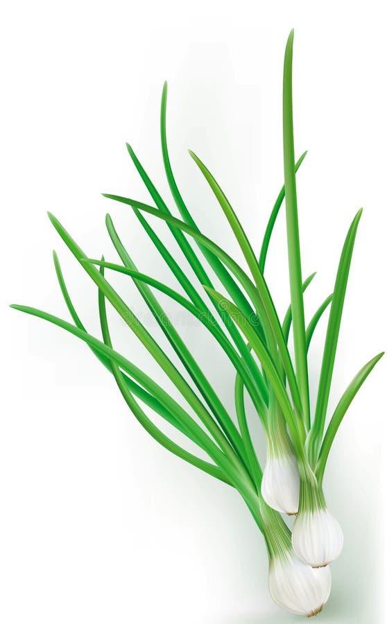 fresh verde vegetablesisolated, macro, naturaleza, stock de ilustración