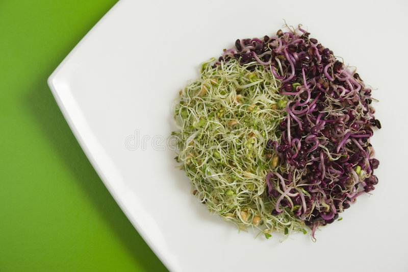 Fresh violet and green germ in yin-yang form. On green table stock image