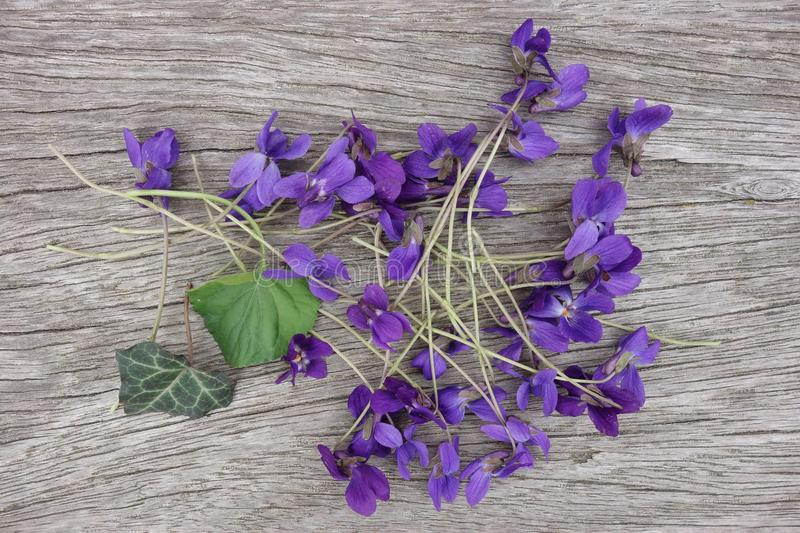 Fresh violets on wooden board royalty free stock images