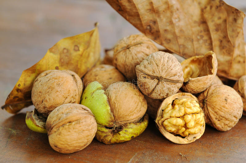 Fresh Walnuts Stock Photography