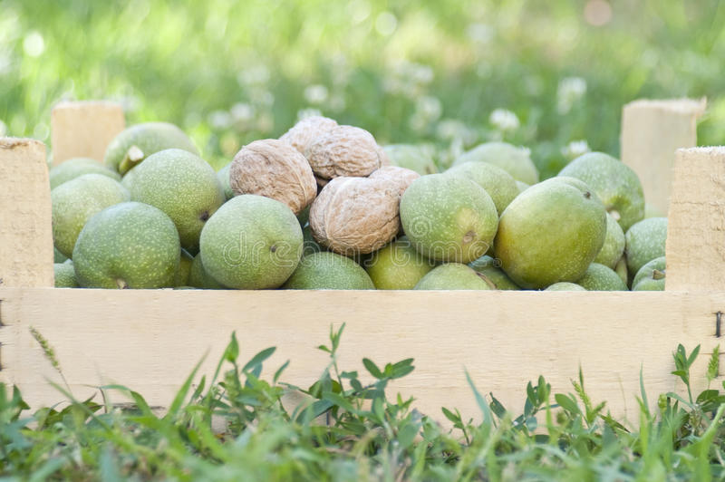 Download Fresh Walnuts In A Box, Natural Background Stock Photo - Image: 26653262