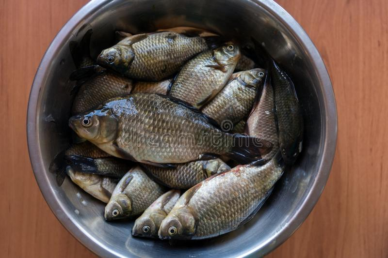 Fresh washed brilliant small lake fish roach lies in a metal plate on a wooden table stock photo