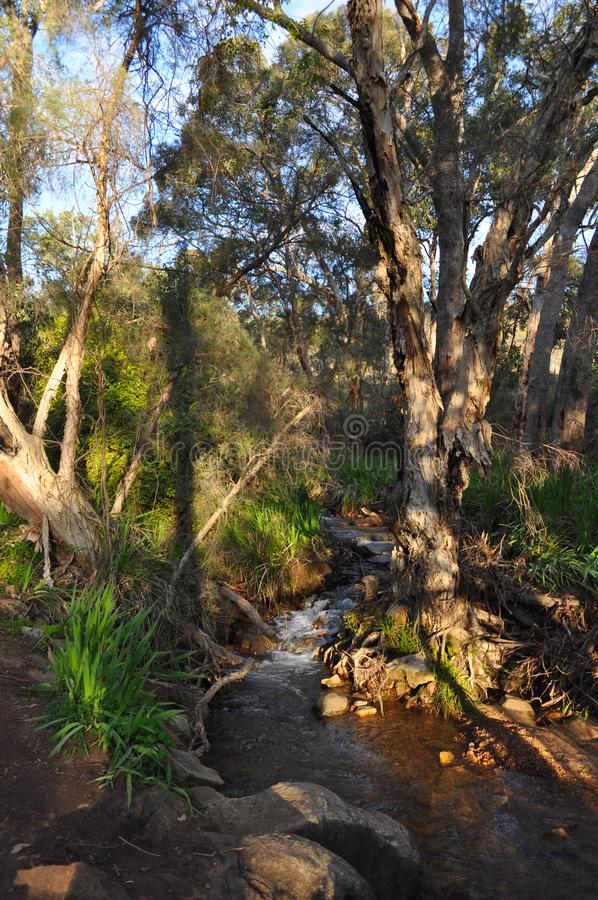 Stream and Eucalyptus trees in Springtime, Australia. Fresh water creek, Whistlepipe Gully Walk, Mundy Regional Park, Kalamunda, Western Australia, Australia royalty free stock photography