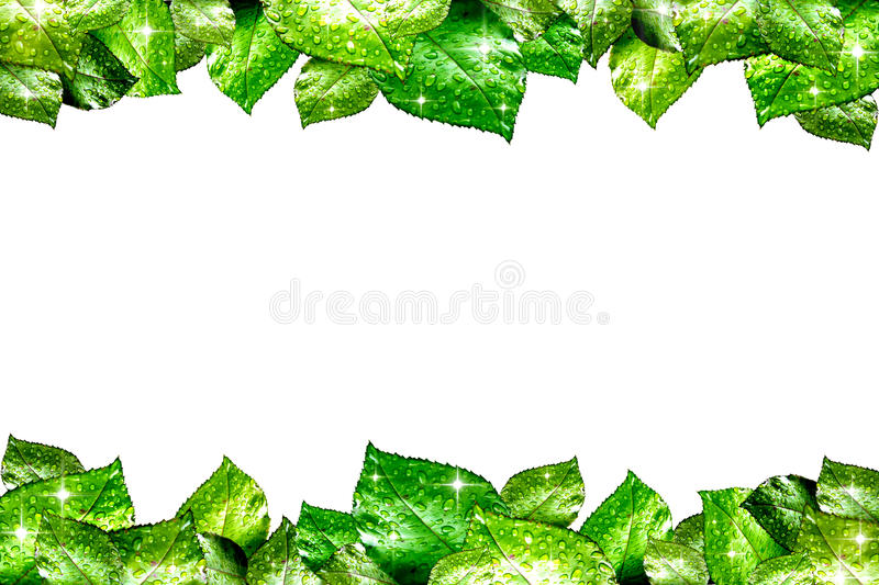 Fresh Water Drops on Green Plant Leaf. Fresh Water Drops on Gree royalty free stock images