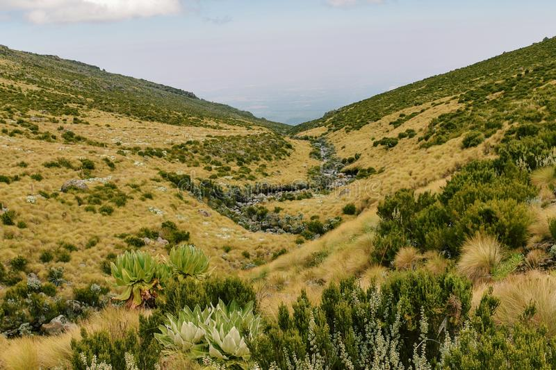 Fresh water river in Mount Kenya National Park, Kenya. A fresh water river against the background of high altitude moorland, Mount Kenya stock image