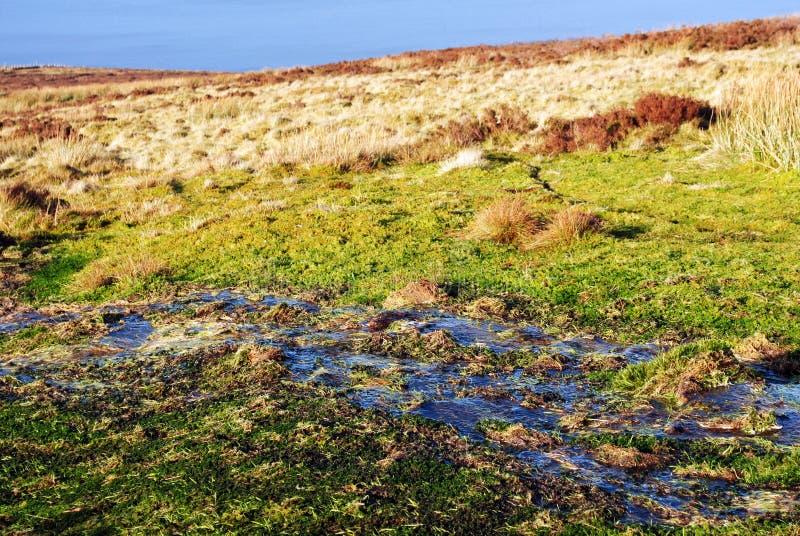 Fresh water stream stock photography