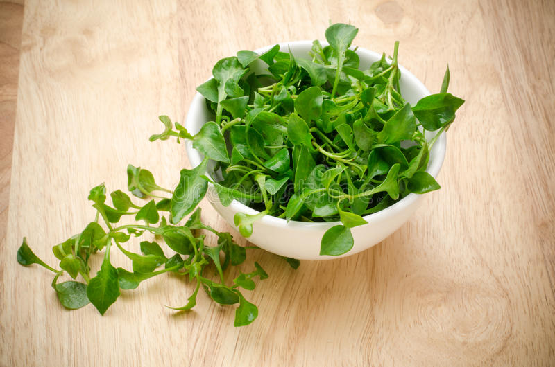 Fresh watercress. (aquatic plant) in the bowl,organic vegetable,clean eating stock photography