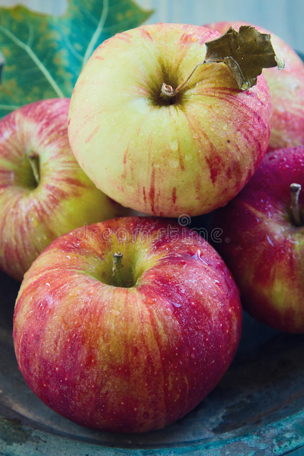 Download Fresh wet apples stock photo. Image of organic, bunch - 27041102