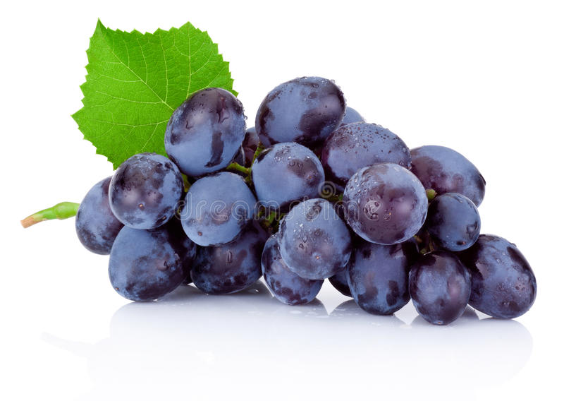 Fresh wet blue grapes with green leaf isolated on white backgrou stock images