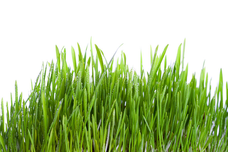 Fresh Wet Grass Stock Photo