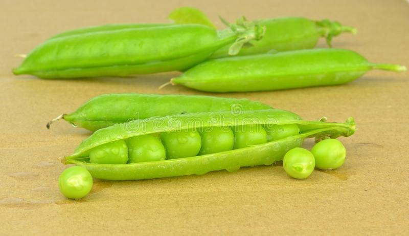 Download Fresh Wet Peas In A Pea Pod Stock Photo - Image: 32631942