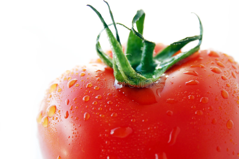 Fresh wet tomato stock image