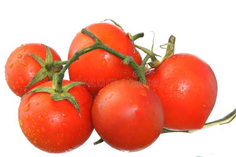 Fresh wet tomatos stock photography