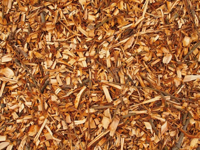 Fresh wet wood chip from alder tree, texture stock image