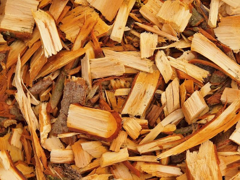Fresh wet wood chip from alder tree, texture. Fresh wet wood chip from alder tree, nature texture royalty free stock photos