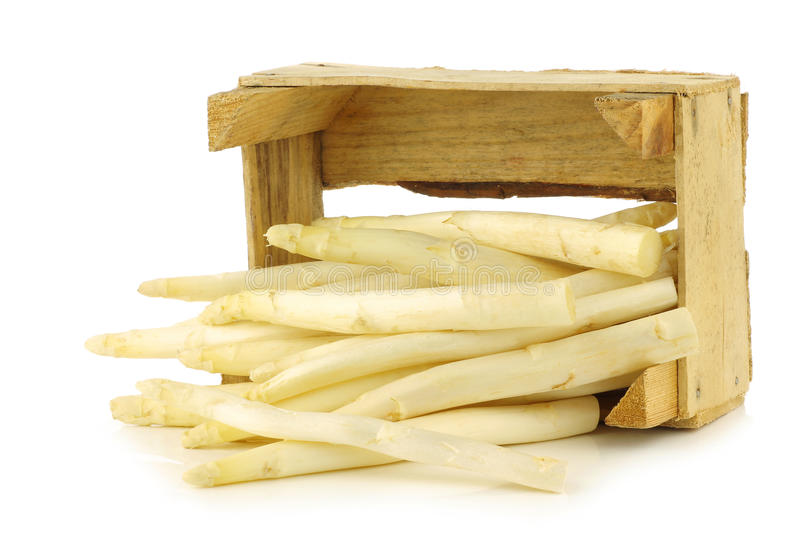 Fresh white asparagus shoots in a wooden crate royalty free stock photo