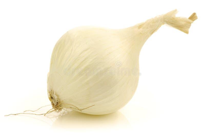 Fresh white onion stock images