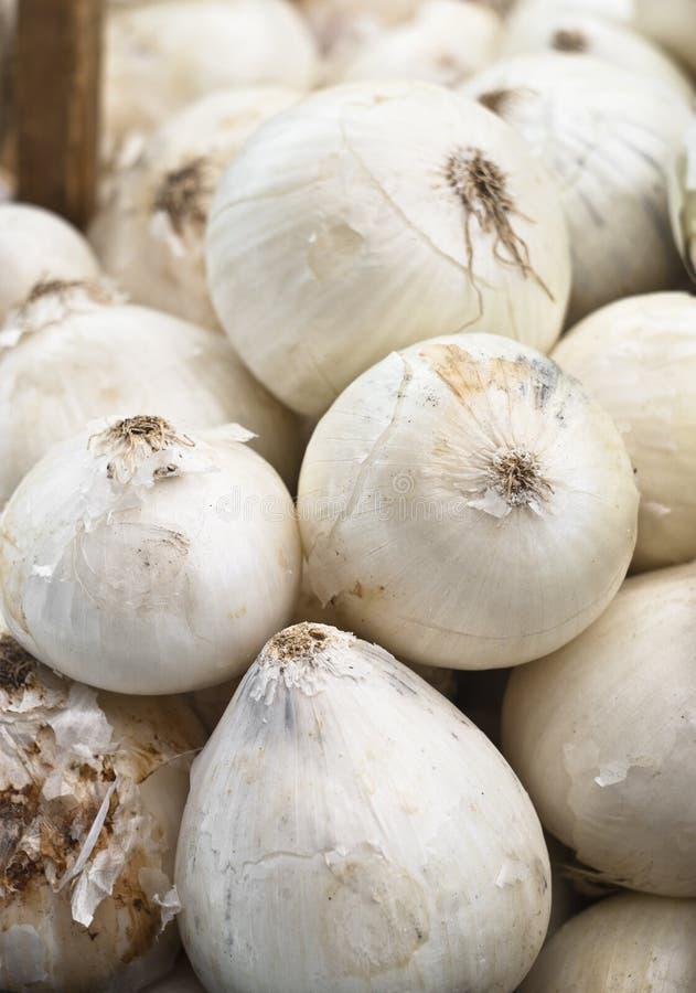 Fresh White Onions Stock Photography