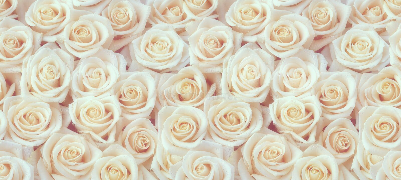 Fresh white roses seamless pattern stock image