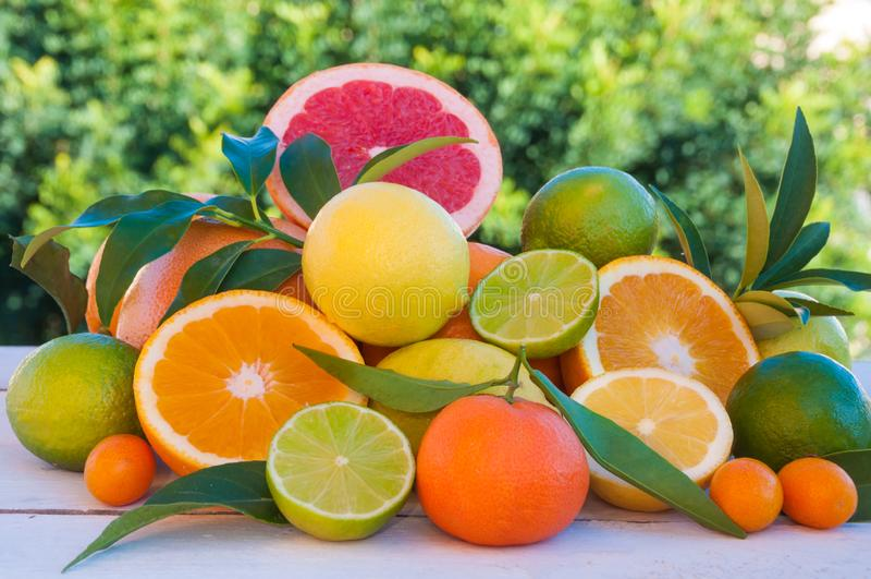 Fresh citrus fruits orange, lemon, grapefruit, mandarin, lime with leaves stock photos