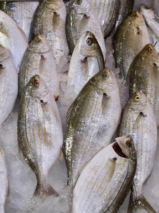 Fresh whole fish at a food market stock photo
