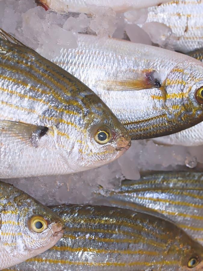 Fresh whole fish at a food market royalty free stock photos