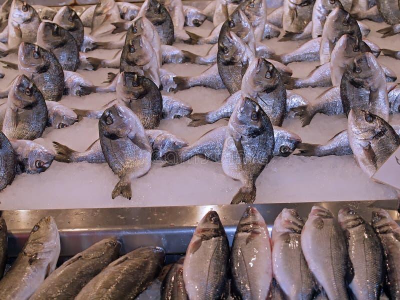 Fresh whole fish at a food market royalty free stock photo