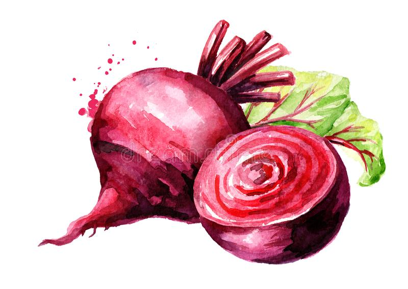 Fresh whole and half Beet root with green leaves. Watercolor hand drawn illustration, isolated on white background stock illustration