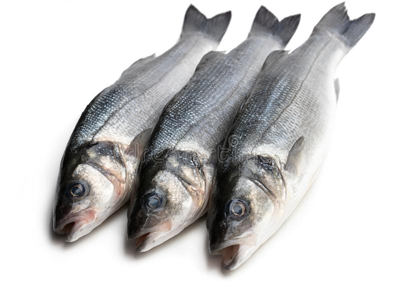 Fresh whole sea bass fish isolated on a white. Fresh  whole sea bass fish isolated on a white royalty free stock photos