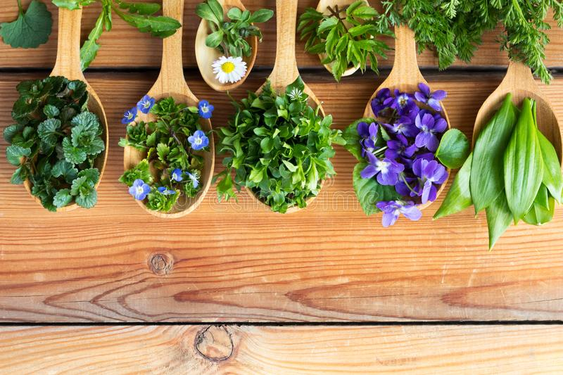 Wild edible spring herbs on wooden spoons stock photography
