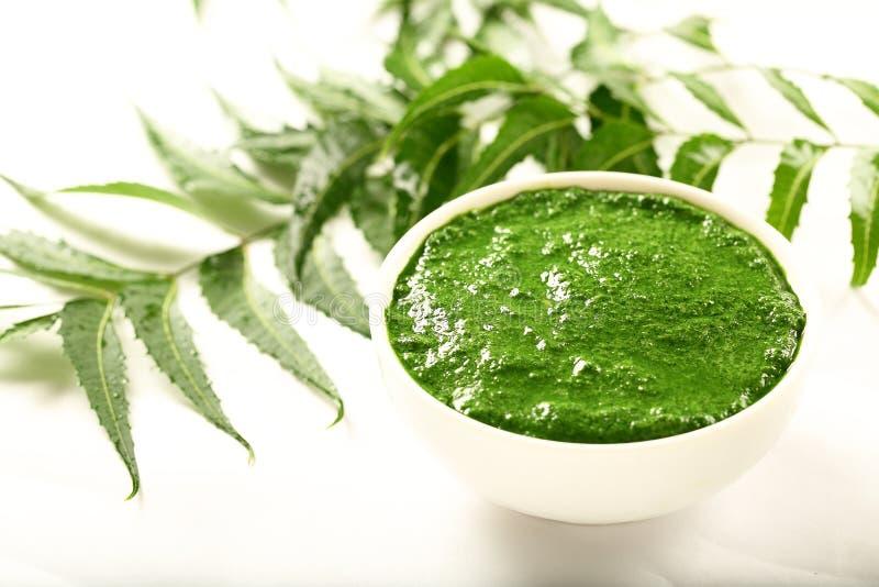 Fresh wild neem tree leaves cream in bowl. stock image