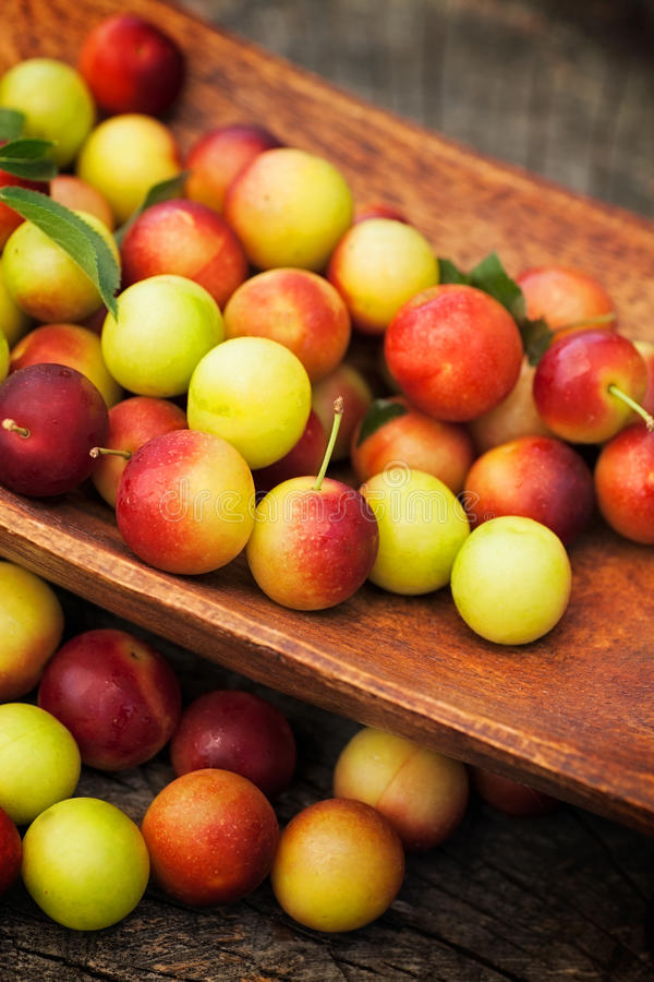 Download Fresh wild plum stock image. Image of green, background - 25511333