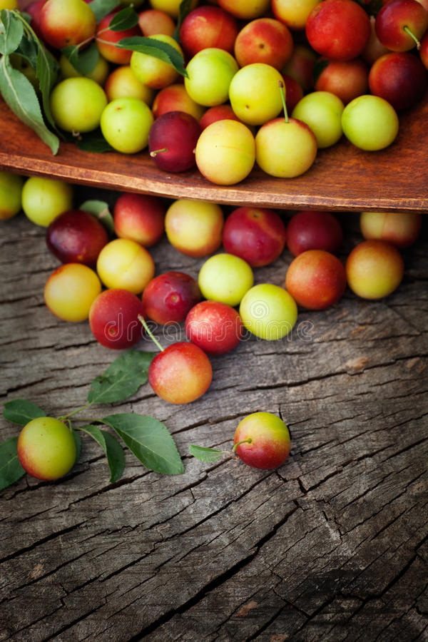 Download Fresh wild plum stock photo. Image of leaf, autumn, forest - 25806188